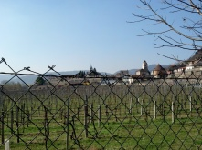 Dürnstein - also a wine-growing region
